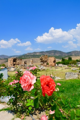 More ruins and flowers!