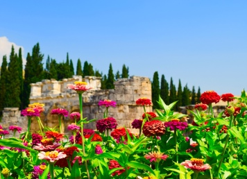 Flowers in amongst ruins. Simply amazing!