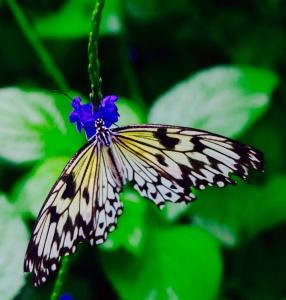 Beautiful butterflies at the Butterfly Sanctuary near Niagara Falls.