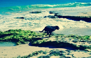 This fun and energetic dog at the beach the other day, showed me a huge burst of energy.
