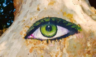 Loved this eye an artist painted on a tree.