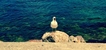 Have you ever seen a seagull yawn? Well me neither  until I took this shot! Now we all have! :)