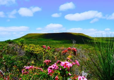 Mount Lesuer. With matching pink wildflowers and grass tree. Another day I will hike it to the top of this mountain.